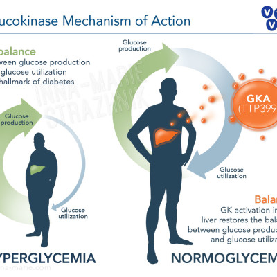 Glucokinase and Hyperglycemia